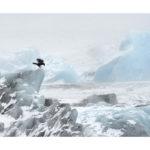 iceberg et glaces en islande
