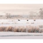 Cerfs sika en hiver dans la neige
