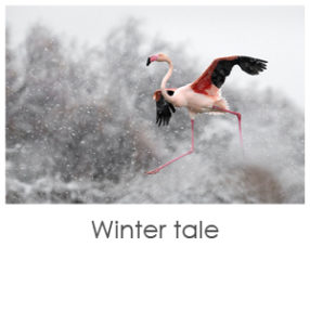 Winter tale, french art photo