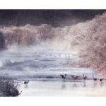 Photo de grues du Japon en hiver par Thierry Vezon